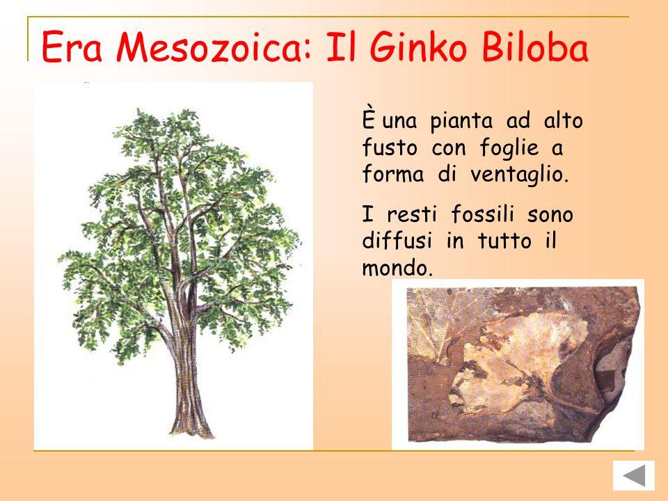 Era Mesozoica Durante l era mesozoica compaiono i DINOSAURI, i primi ANIMALI VOLANTI e i primi mammiferi.DINOSAURIANIMALI VOLANTI Nelle foreste è pres