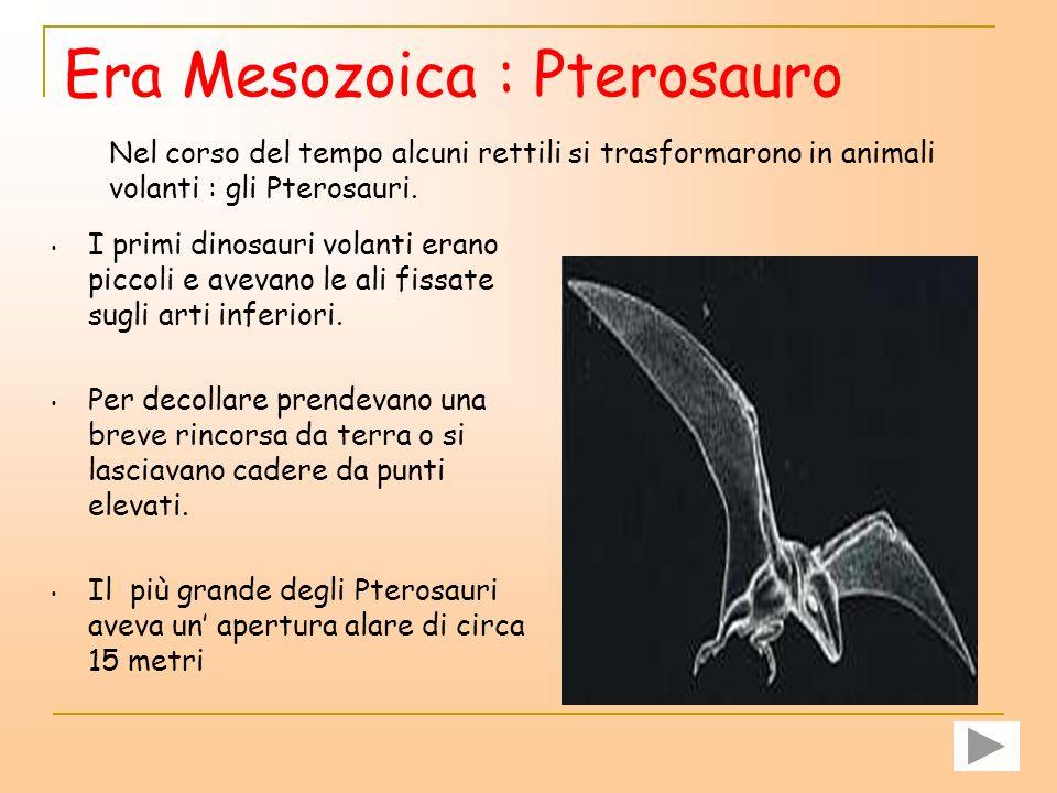 Il significato del nome triceratops è faccia a tre corna. Aveva una vista acuta ed era capace di correre a 25 chilometri orari. Usava le tre lunghe co