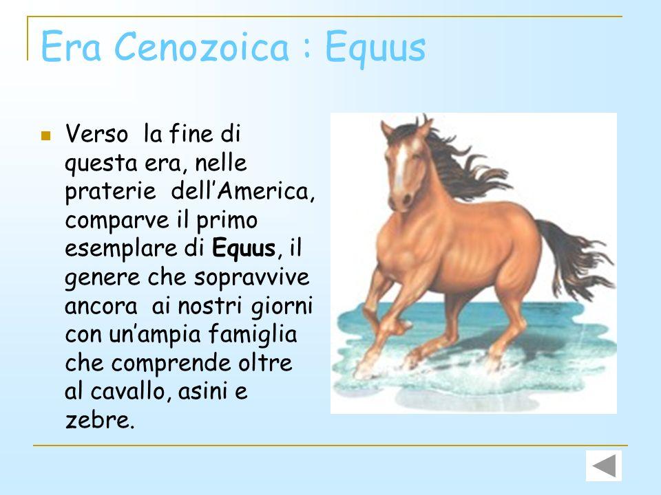Era Cenozoica: Eohippus Era grande circa come una grossa lepre e si cibava di foglie e arbusti strappati alle piante. Aveva i denti aguzzi, il dorso a