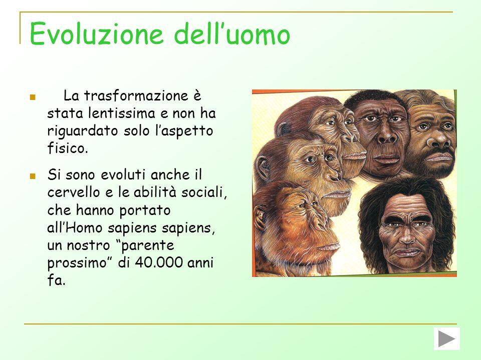 Evoluzione delluomo Oggi, lHomo sapiens sapiens è lunico sopravvissuto tra gli ominidi superstiti, i cui parenti più prossimi sono il Gorilla e lo Sci