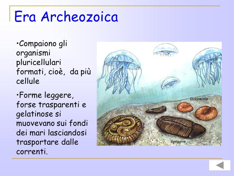 Era Archeozoica Tra gli organismi unicellulari vi sono i batteri e le alghe verdi-azzurre come gli Stromatoliti. Gli Stromatoliti sono tappeti di algh