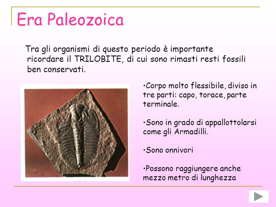 Era Paleozoica Nel corso dellera paleozoica comparvero spugne, molluschi, crostacei e i primi esemplari di pesci, insetti, anfibi e rettili. Anche il