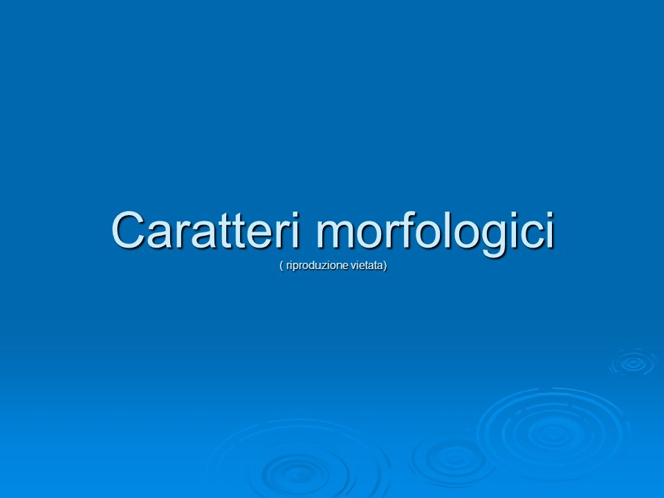 Caratteri morfologici ( riproduzione vietata)