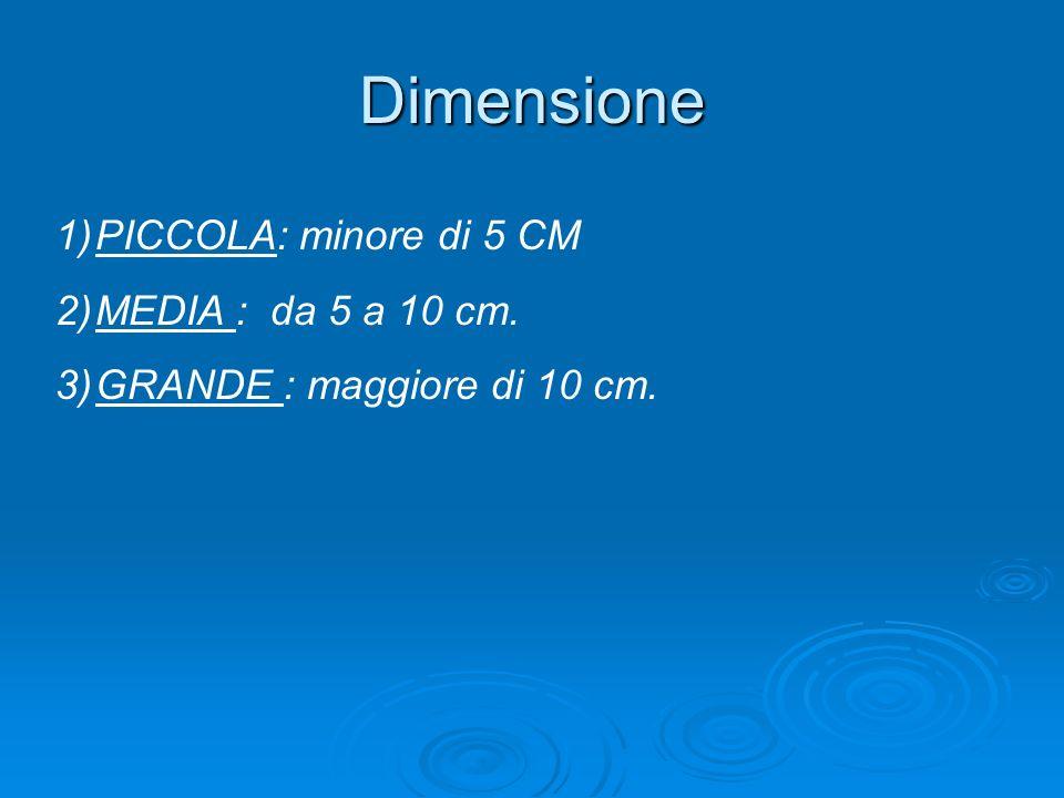 Dimensione 1)PICCOLA: minore di 5 CM 2)MEDIA : da 5 a 10 cm. 3)GRANDE : maggiore di 10 cm.