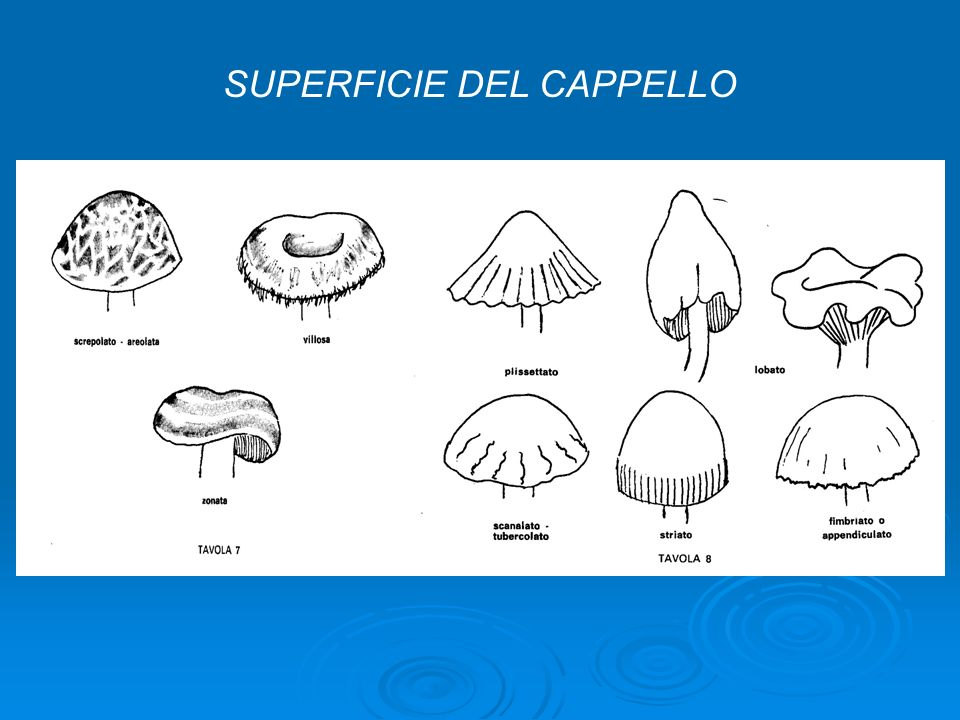 SUPERFICIE DEL CAPPELLO
