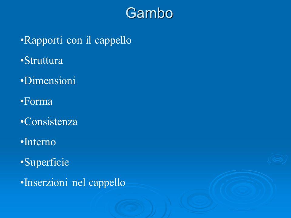 Gambo Rapporti con il cappello Struttura Dimensioni Forma Consistenza Interno Superficie Inserzioni nel cappello
