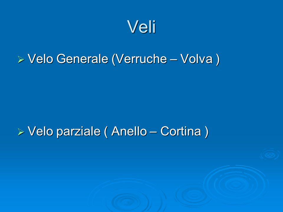 Veli Velo Generale (Verruche – Volva ) Velo Generale (Verruche – Volva ) Velo parziale ( Anello – Cortina ) Velo parziale ( Anello – Cortina )