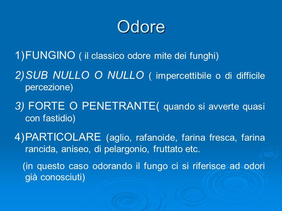Odore 1)FUNGINO ( il classico odore mite dei funghi) 2)SUB NULLO O NULLO ( impercettibile o di difficile percezione) 3) FORTE O PENETRANTE( quando si avverte quasi con fastidio) 4)PARTICOLARE (aglio, rafanoide, farina fresca, farina rancida, aniseo, di pelargonio, fruttato etc.