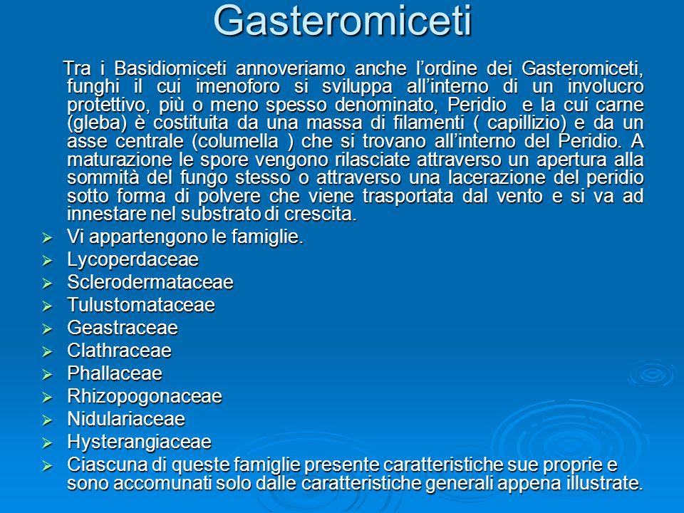 Gasteromiceti Tra i Basidiomiceti annoveriamo anche lordine dei Gasteromiceti, funghi il cui imenoforo si sviluppa allinterno di un involucro protettivo, più o meno spesso denominato, Peridio e la cui carne (gleba) è costituita da una massa di filamenti ( capillizio) e da un asse centrale (columella ) che si trovano allinterno del Peridio.