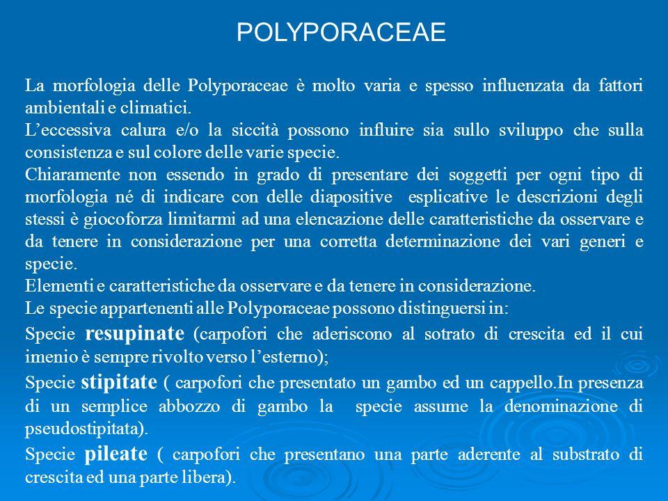 La morfologia delle Polyporaceae è molto varia e spesso influenzata da fattori ambientali e climatici.