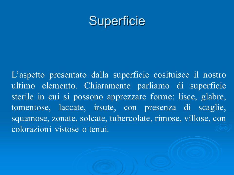 Superficie Laspetto presentato dalla superficie cosituisce il nostro ultimo elemento.
