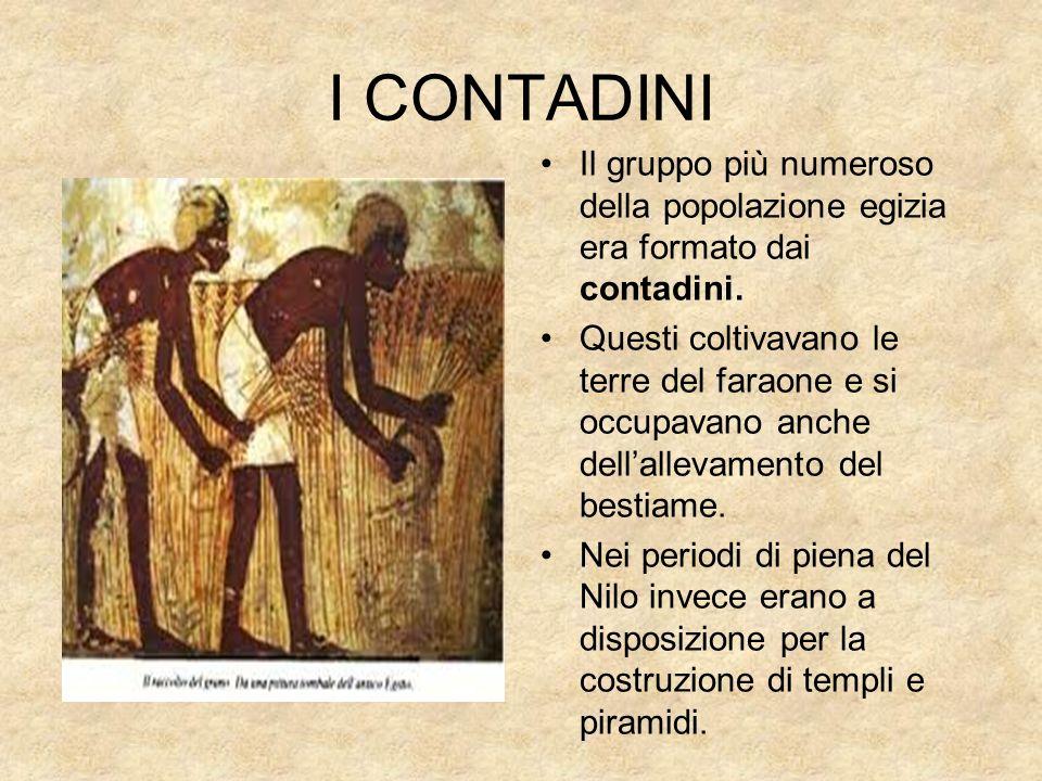 I CONTADINI Il gruppo più numeroso della popolazione egizia era formato dai contadini. Questi coltivavano le terre del faraone e si occupavano anche d