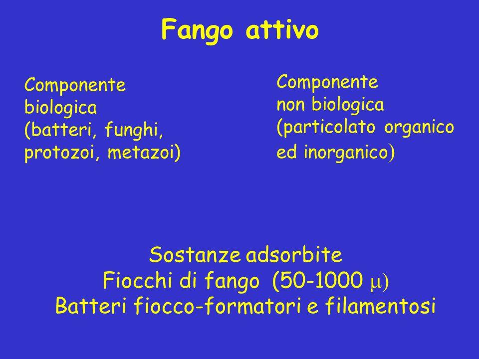 Componente non biologica (particolato organico ed inorganico ) Fango attivo Componente biologica (batteri, funghi, protozoi, metazoi) Sostanze adsorbi