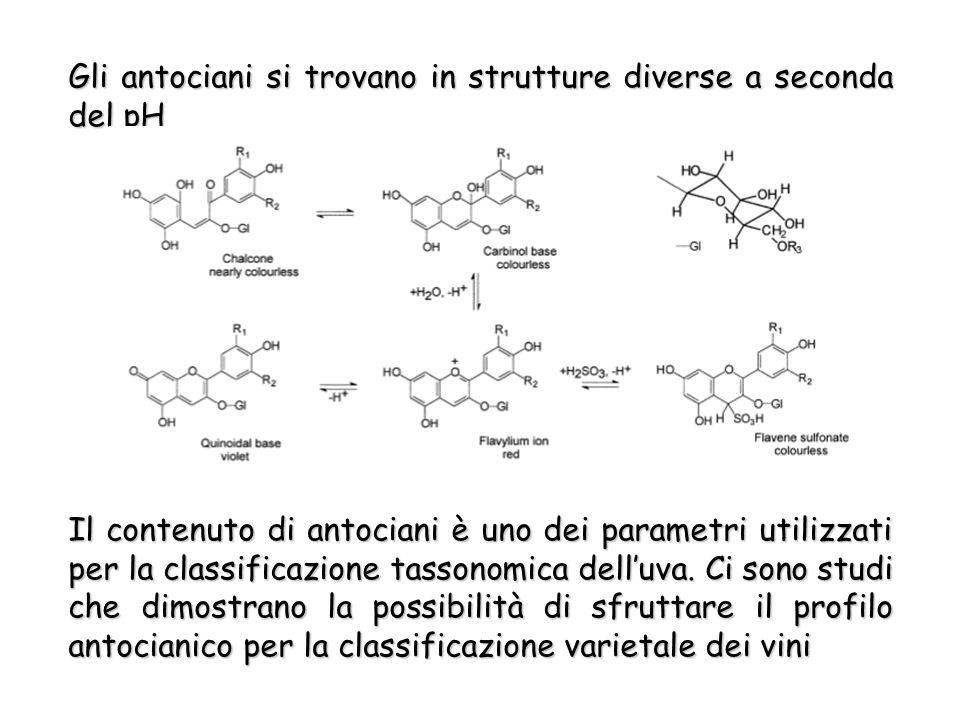 Gli antociani si trovano in strutture diverse a seconda del pH Il contenuto di antociani è uno dei parametri utilizzati per la classificazione tassonomica delluva.
