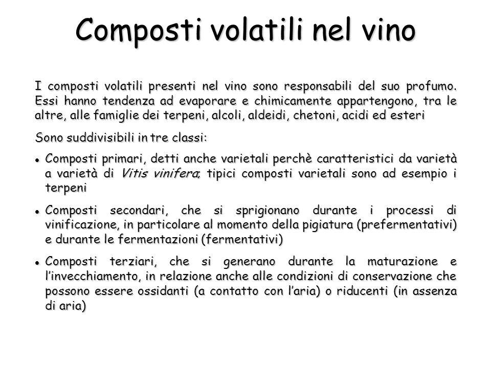 I composti volatili presenti nel vino sono responsabili del suo profumo.