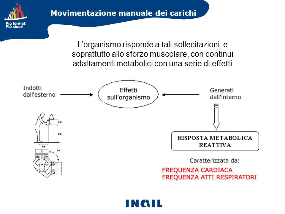 Movimentazione manuale dei carichi Lorganismo risponde a tali sollecitazioni, e soprattutto allo sforzo muscolare, con continui adattamenti metabolici