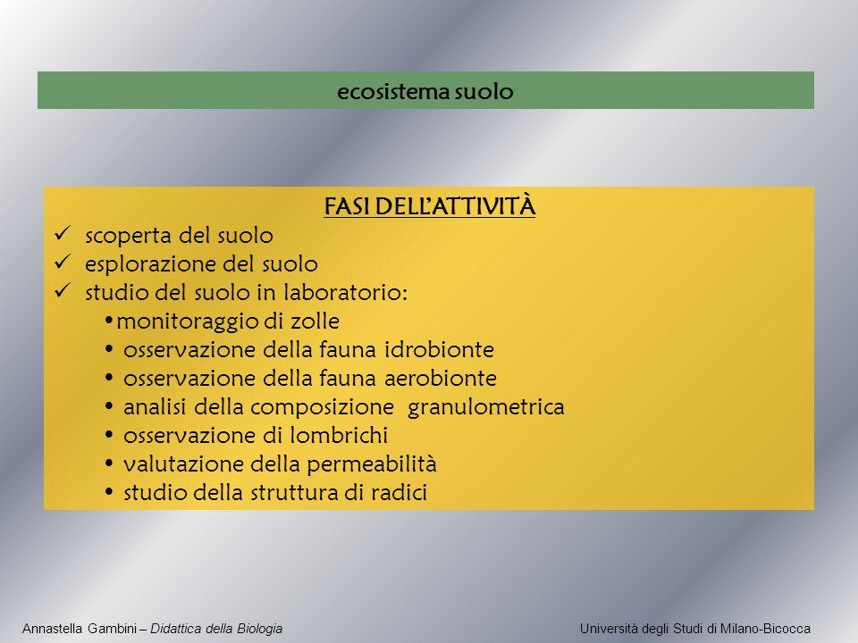Annastella Gambini – Didattica della Biologia Università degli Studi di Milano-Bicocca FASI DELLATTIVITÀ scoperta del suolo esplorazione del suolo stu