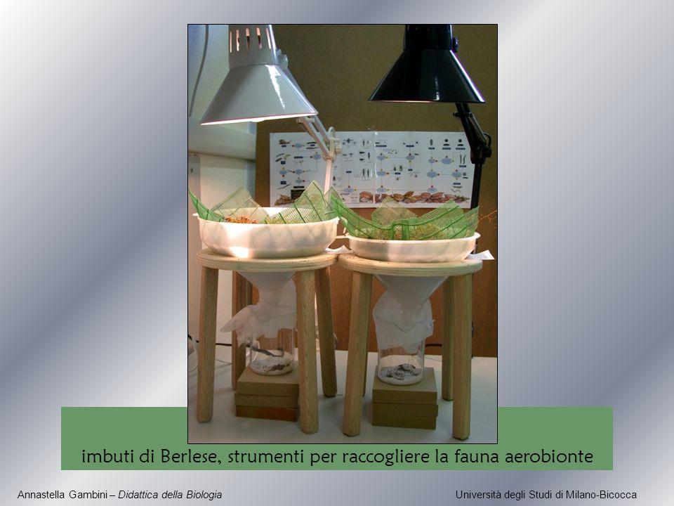 Annastella Gambini – Didattica della Biologia Università degli Studi di Milano-Bicocca imbuti di Berlese, strumenti per raccogliere la fauna aerobiont