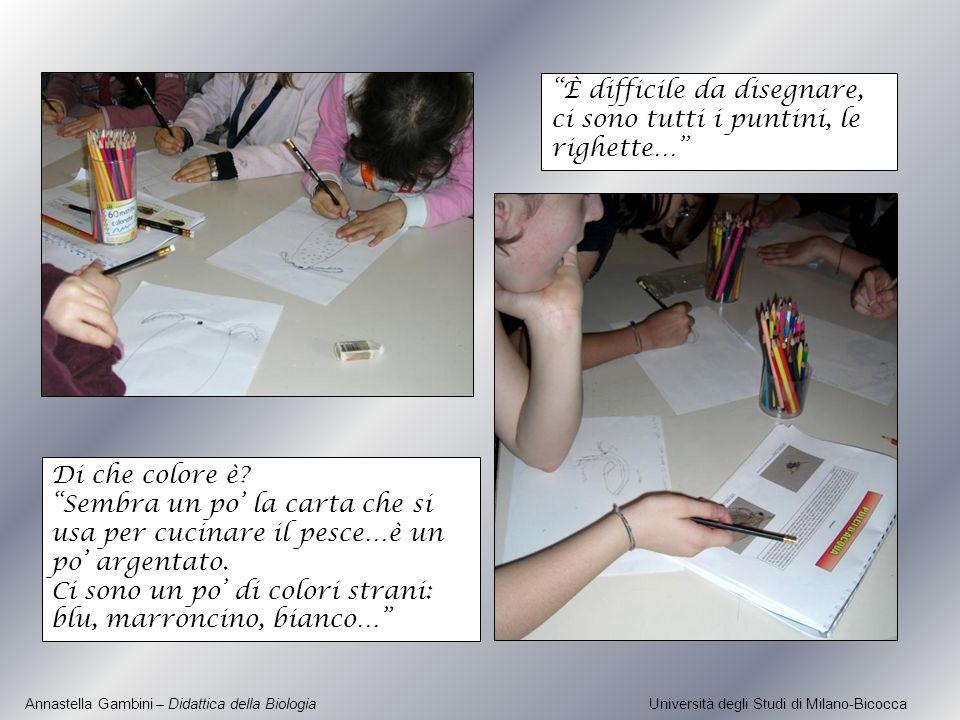 Annastella Gambini – Didattica della Biologia Università degli Studi di Milano-Bicocca Di che colore è? Sembra un po la carta che si usa per cucinare