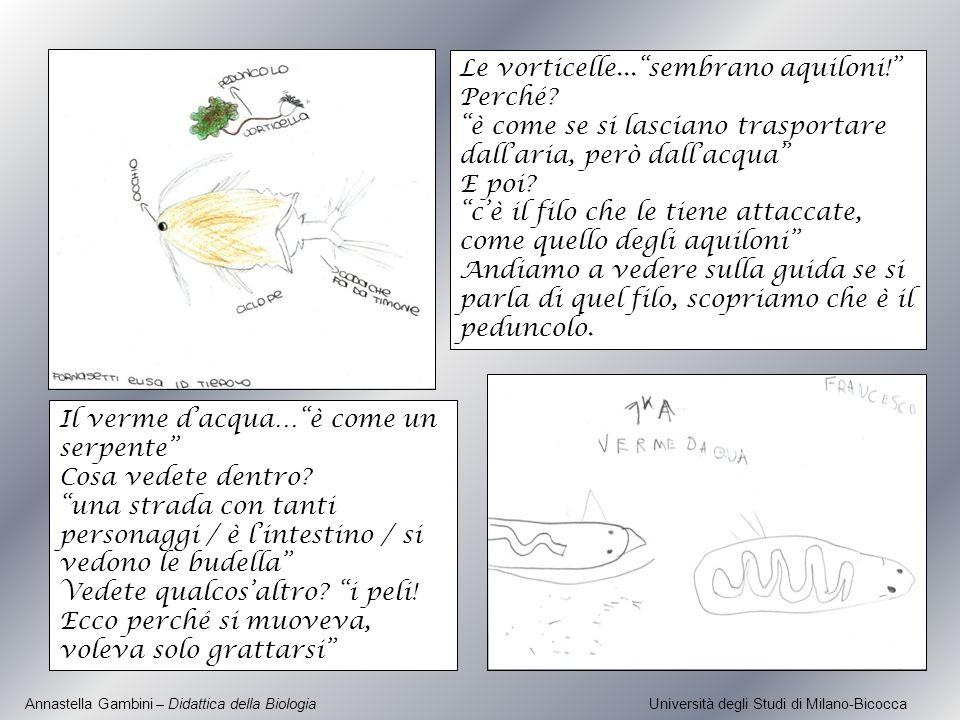 Annastella Gambini – Didattica della Biologia Università degli Studi di Milano-Bicocca Le vorticelle...sembrano aquiloni! Perché? è come se si lascian