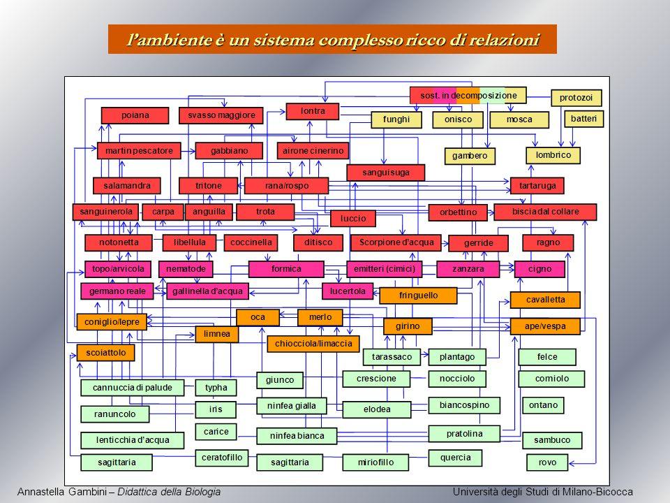 Annastella Gambini – Didattica della Biologia Università degli Studi di Milano-Bicocca lambiente è un sistema complesso ricco di relazioni