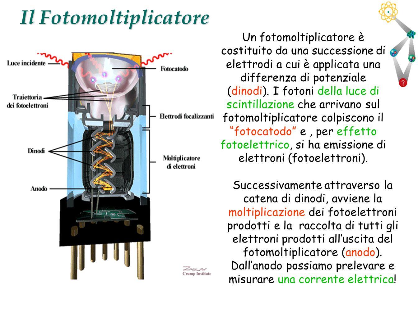 12 Il Fotomoltiplicatore Successivamente attraverso la catena di dinodi, avviene la moltiplicazione dei fotoelettroni prodotti e la raccolta di tutti