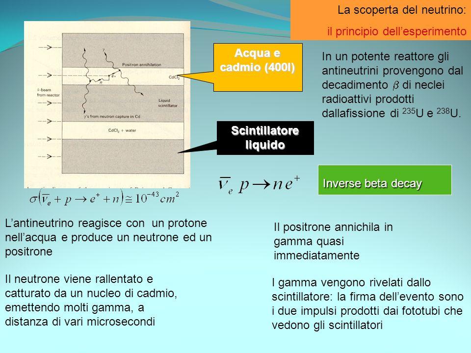 La scoperta del neutrino: il principio dellesperimento Acqua e cadmio (400l) Scintillatore liquido Lantineutrino reagisce con un protone nellacqua e p
