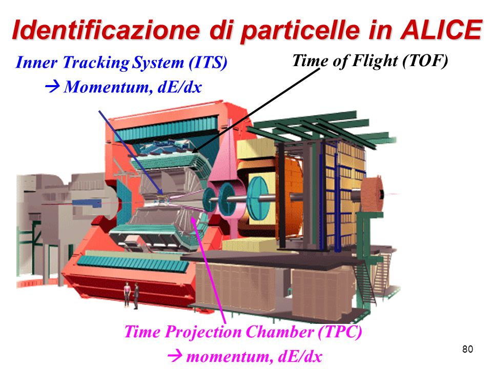80 Inner Tracking System (ITS) Momentum, dE/dx Time Projection Chamber (TPC) momentum, dE/dx Time of Flight (TOF) Identificazione di particelle in ALI