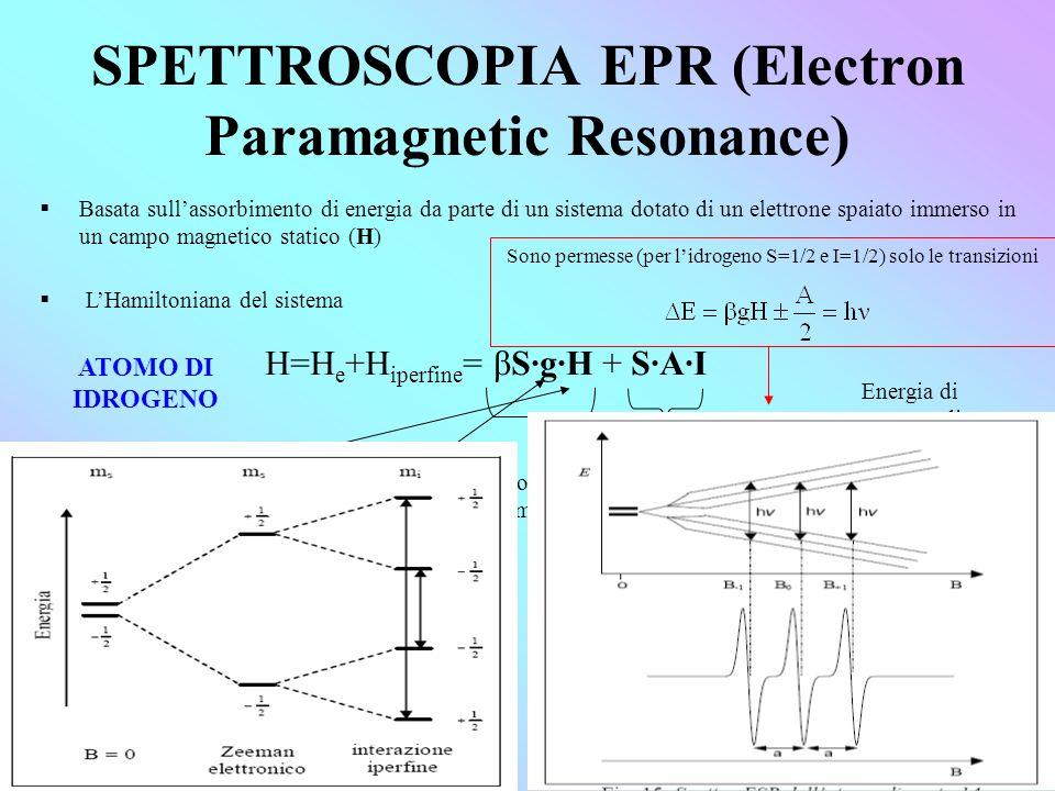SPETTROSCOPIA EPR (Electron Paramagnetic Resonance) Basata sullassorbimento di energia da parte di un sistema dotato di un elettrone spaiato immerso in un campo magnetico statico (H) LHamiltoniana del sistema H=H e +H iperfine = βS·g·H + S·A·I Interazione col campo magnetico Interazione iperfine Campo magnetico efficace Rapporto giromagnetico considera lo splitting Zeeman Energia di contatto di Fermi Termine dipolare ATOMO DI IDROGENO Sono permesse (per lidrogeno S=1/2 e I=1/2) solo le transizioni