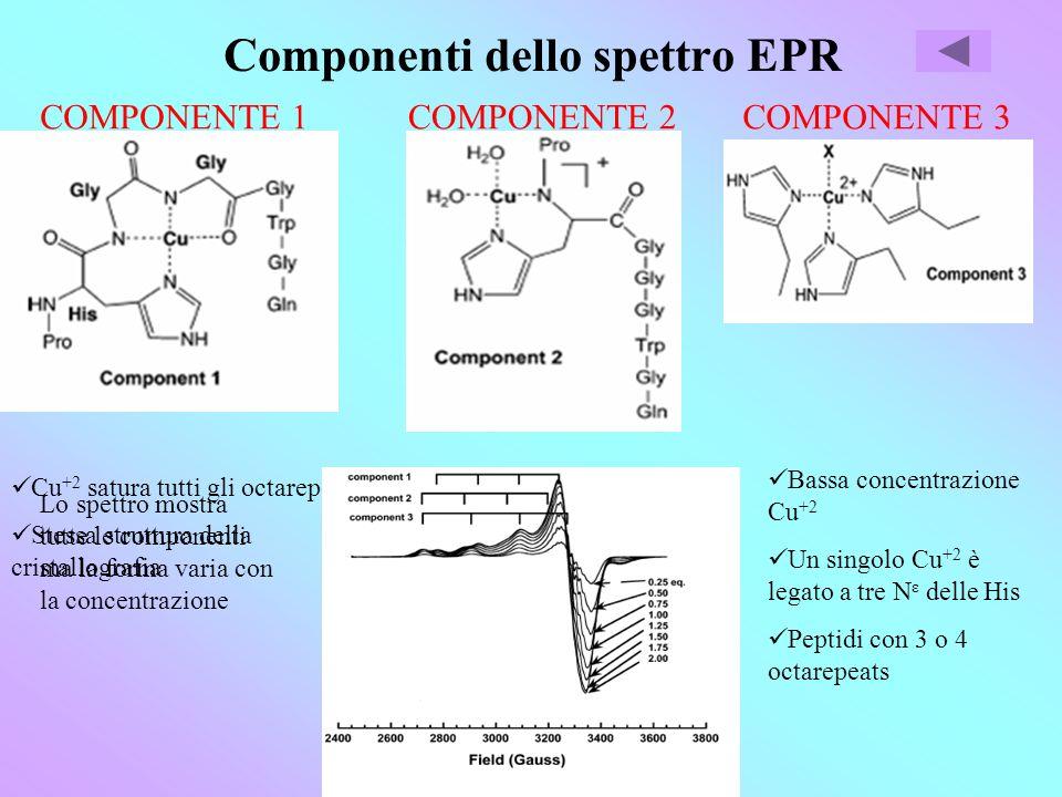 Componenti dello spettro EPR COMPONENTE 1 Cu +2 satura tutti gli octarepeats Stessa struttura della cristallografia COMPONENTE 2 Concentrazione intermedia Cu +2 Riduzione distanza tra atomi Cu +2 si lega a N ε e N dellHis e agli O di due H 2 O Stabilizzato da più octarepeats COMPONENTE 3 Bassa concentrazione Cu +2 Un singolo Cu +2 è legato a tre N ε delle His Peptidi con 3 o 4 octarepeats Lo spettro mostra tutte le componenti ma la forma varia con la concentrazione
