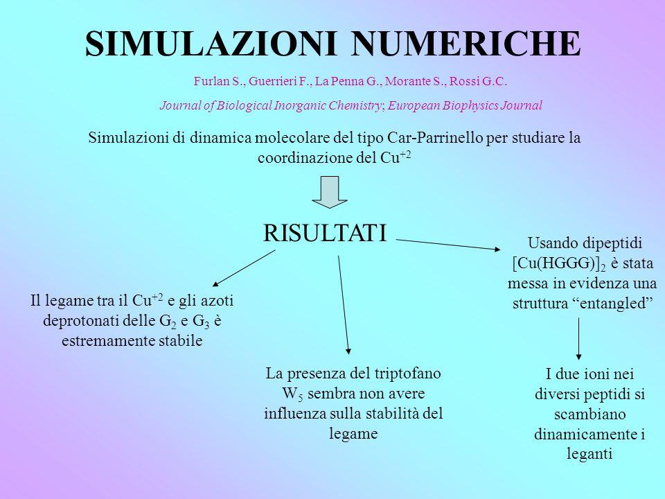SIMULAZIONI NUMERICHE Simulazioni di dinamica molecolare del tipo Car-Parrinello per studiare la coordinazione del Cu +2 RISULTATI Il legame tra il Cu +2 e gli azoti deprotonati delle G 2 e G 3 è estremamente stabile La presenza del triptofano W 5 sembra non avere influenza sulla stabilità del legame Usando dipeptidi [Cu(HGGG)] 2 è stata messa in evidenza una struttura entangled I due ioni nei diversi peptidi si scambiano dinamicamente i leganti Furlan S., Guerrieri F., La Penna G., Morante S., Rossi G.C.