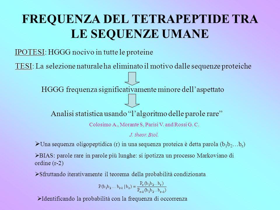 FREQUENZA DEL TETRAPEPTIDE TRA LE SEQUENZE UMANE IPOTESI IPOTESI: HGGG nocivo in tutte le proteine TESI TESI: La selezione naturale ha eliminato il motivo dalle sequenze proteiche HGGG frequenza significativamente minore dellaspettato Analisi statistica usando lalgoritmo delle parole rare Una sequenza oligopeptidica (r) in una sequenza proteica è detta parola (b 1 b 2 …b r ) BIAS: parole rare in parole più lunghe: si ipotizza un processo Markoviano di ordine (r-2) Sfruttando iterativamente il teorema della probabilità condizionata Identificando la probabilità con la frequenza di occorrenza Colosimo A., Morante S, Parisi V.