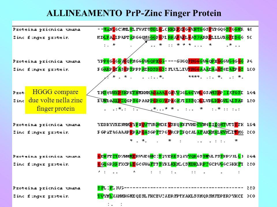 ALLINEAMENTO PrP-Zinc Finger Protein HGGG compare due volte nella zinc finger protein