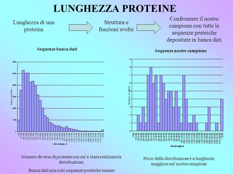 LUNGHEZZA PROTEINE Lunghezza di una proteina Struttura e funzioni svolte Confrontare il nostro campione con tutte le sequenze proteiche depositate in banca dati Sequenze banca dati Sequenze nostro campione Numero diverso di proteine con cui è stata realizzata la distribuzione; Banca dati non solo sequenze proteiche umane Picco della distribuzione è a lunghezza maggiore nel nostro campione