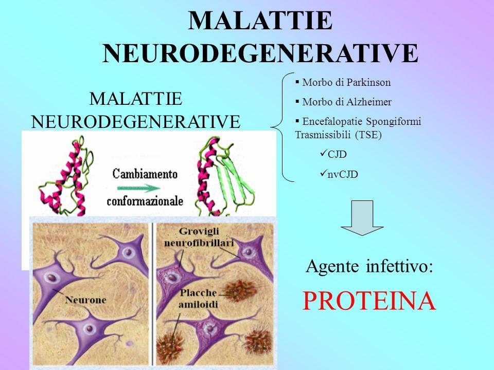 MALATTIE NEURODEGENERATIVE Agente infettivo: PROTEINA MALATTIE NEURODEGENERATIVE Morbo di Parkinson Morbo di Alzheimer Encefalopatie Spongiformi Trasmissibili (TSE) CJD nvCJD MISFOLDING AGGREGAZIONE