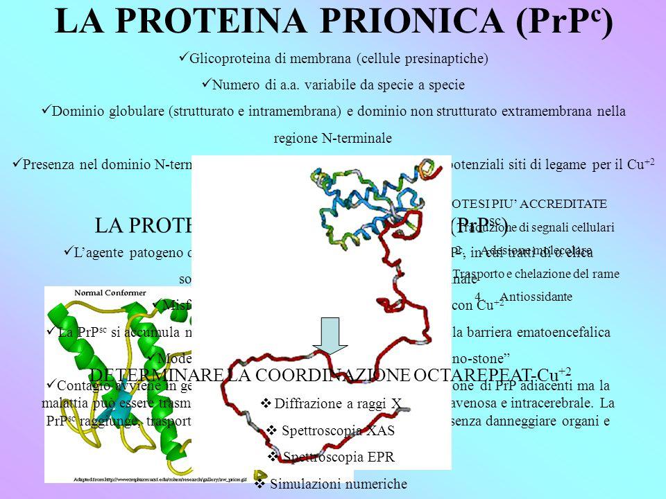 LA PROTEINA PRIONICA (PrP c ) Glicoproteina di membrana (cellule presinaptiche) Numero di a.a.