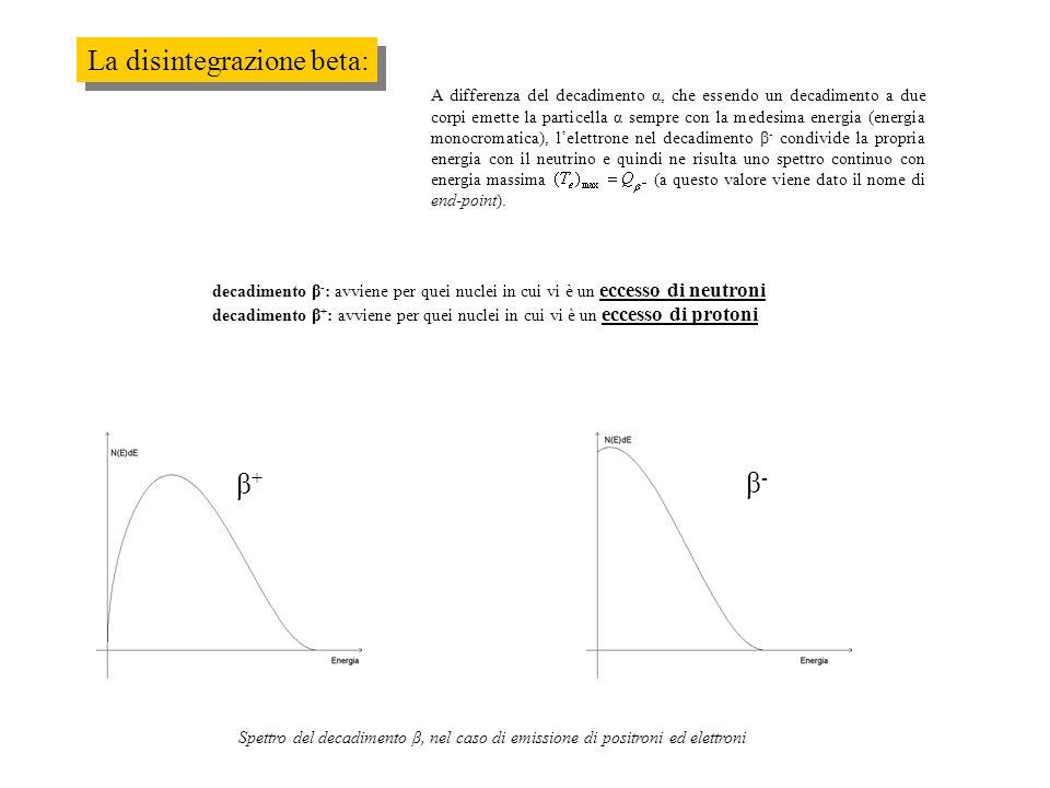 La disintegrazione beta: A differenza del decadimento α, che essendo un decadimento a due corpi emette la particella α sempre con la medesima energia