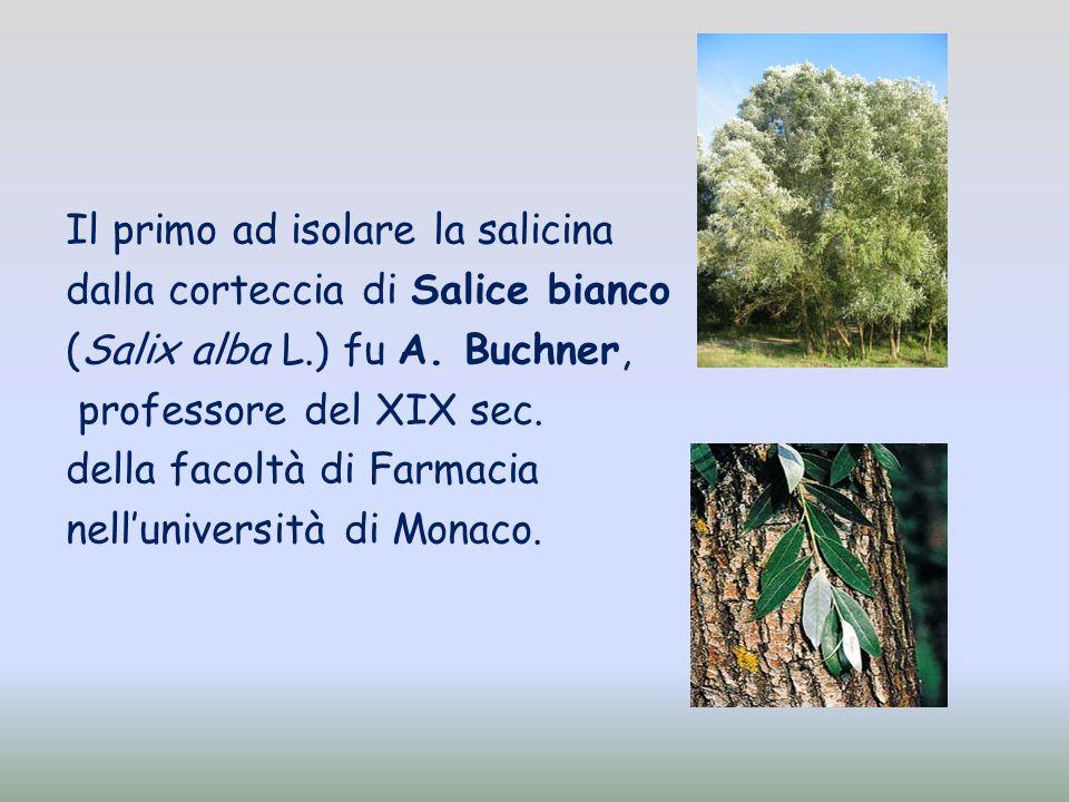 Il primo ad isolare la salicina dalla corteccia di Salice bianco (Salix alba L.) fu A. Buchner, professore del XIX sec. della facoltà di Farmacia nell