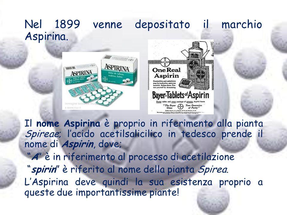Nel 1899 venne depositato il marchio Aspirina. Il nome Aspirina è proprio in riferimento alla pianta Spireae; lacido acetilsalicilico in tedesco prend