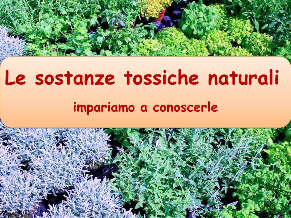 Le sostanze tossiche naturali impariamo a conoscerle