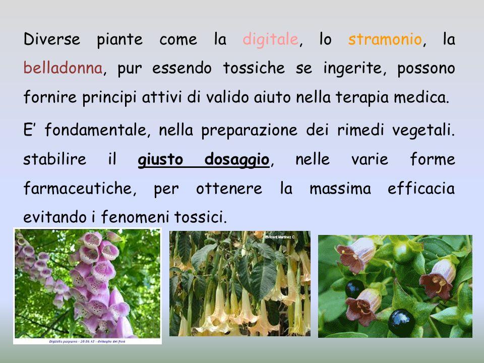 Diverse piante come la digitale, lo stramonio, la belladonna, pur essendo tossiche se ingerite, possono fornire principi attivi di valido aiuto nella