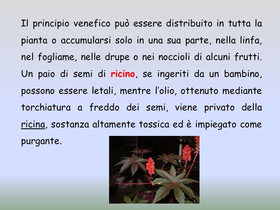 Il principio venefico può essere distribuito in tutta la pianta o accumularsi solo in una sua parte, nella linfa, nel fogliame, nelle drupe o nei nocc