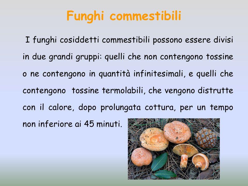 Funghi commestibili I funghi cosiddetti commestibili possono essere divisi in due grandi gruppi: quelli che non contengono tossine o ne contengono in