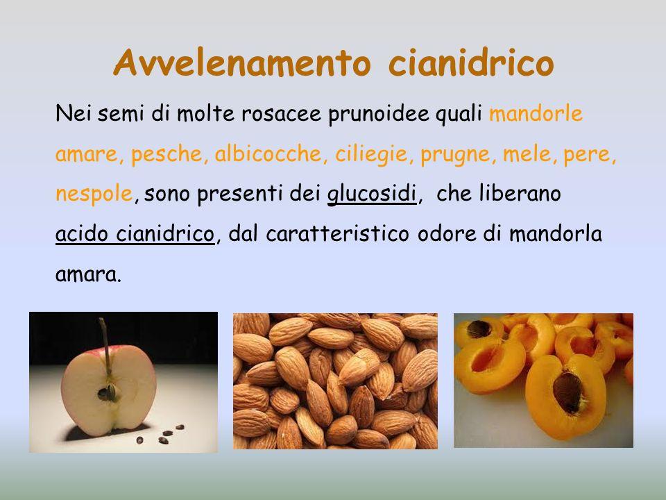 Avvelenamento cianidrico Nei semi di molte rosacee prunoidee quali mandorle amare, pesche, albicocche, ciliegie, prugne, mele, pere, nespole, sono pre