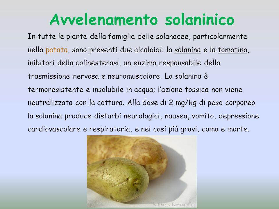 Avvelenamento solaninico In tutte le piante della famiglia delle solanacee, particolarmente nella patata, sono presenti due alcaloidi: la solanina e la tomatina, inibitori della colinesterasi, un enzima responsabile della trasmissione nervosa e neuromuscolare.