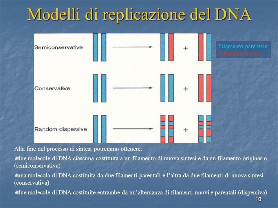 10 Modelli di replicazione del DNA Alla fine del processo di sintesi potremmo ottenere: due molecole di DNA ciascuna costituita a un filamento di nuov