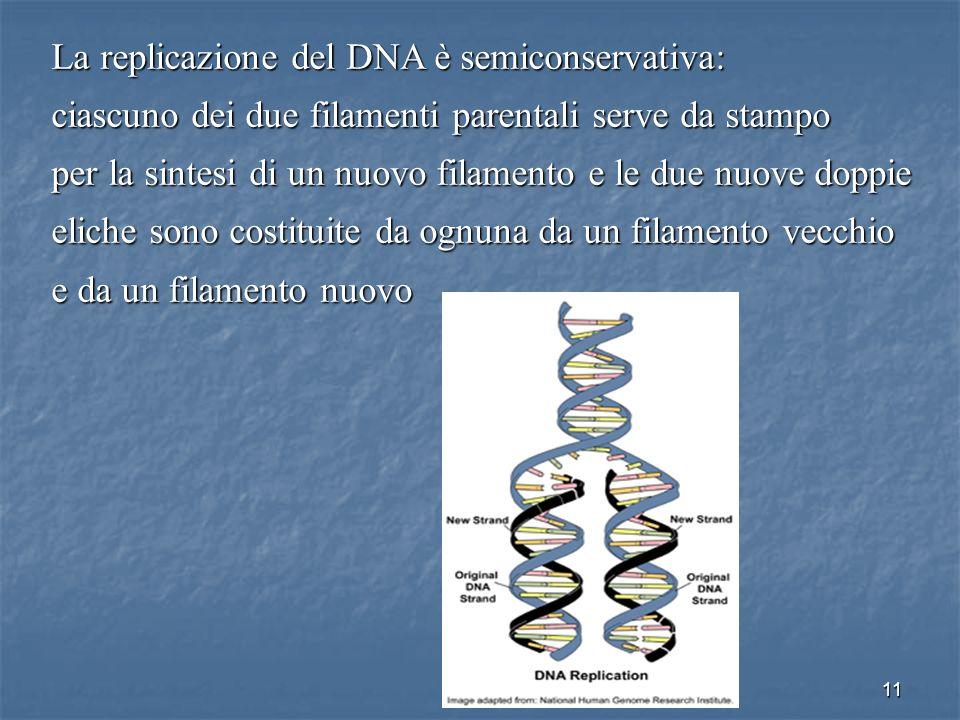 11 La replicazione del DNA è semiconservativa: ciascuno dei due filamenti parentali serve da stampo per la sintesi di un nuovo filamento e le due nuov