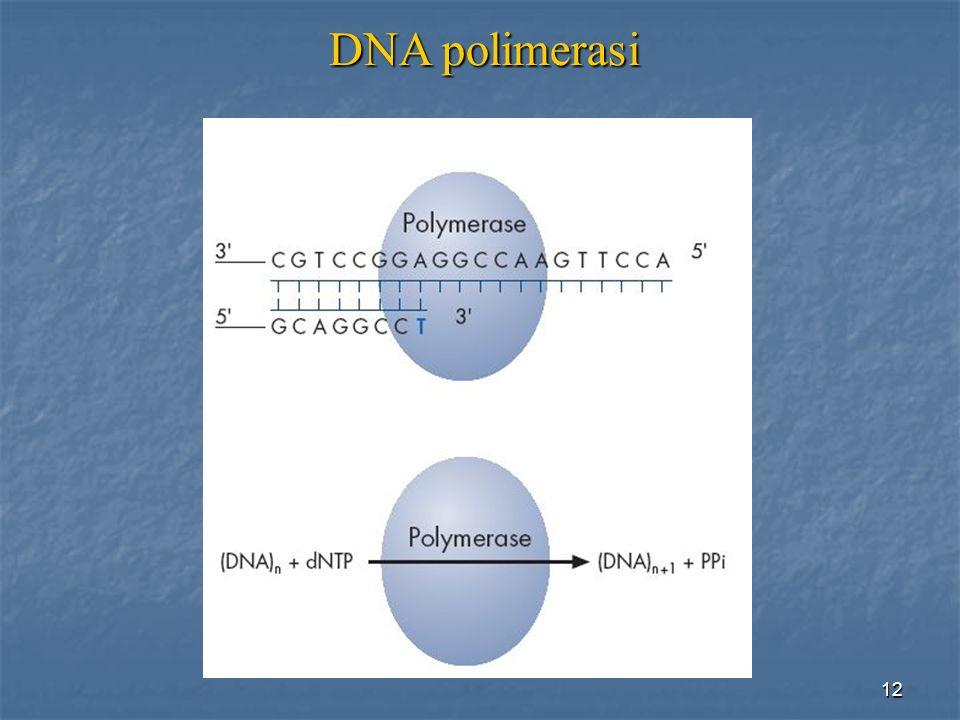 12 DNApolimerasi DNA polimerasi