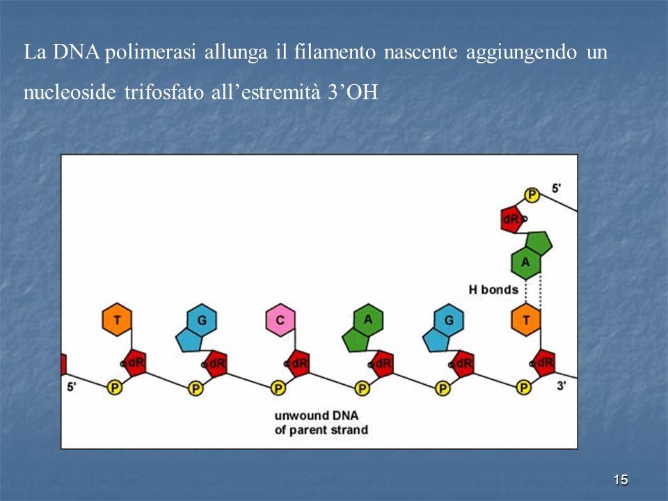 15 La DNA polimerasi allunga il filamento nascente aggiungendo un nucleoside trifosfato allestremità 3OH