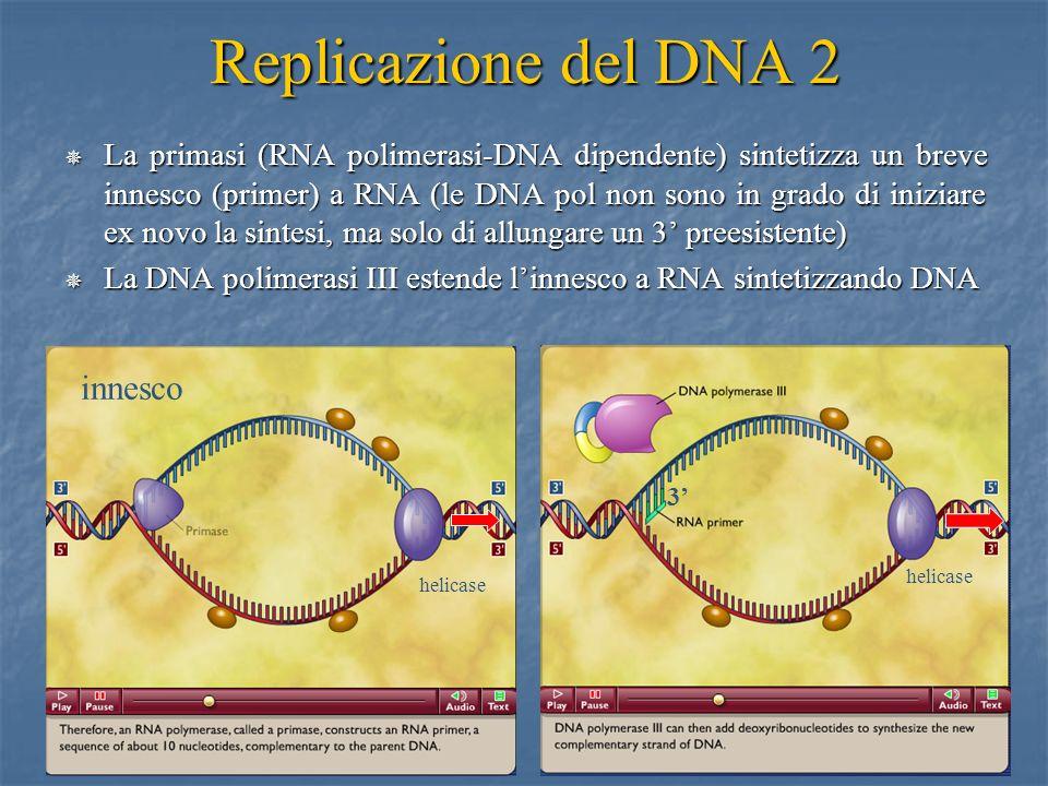 19 Replicazione del DNA 2 La primasi (RNA polimerasi-DNA dipendente) sintetizza un breve innesco (primer) a RNA (le DNA pol non sono in grado di inizi